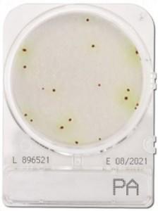 Đĩa Compact Dry Pseudomonas Aeruginosa   Compact Dry Pseudomonas Aeruginosa   Nissui