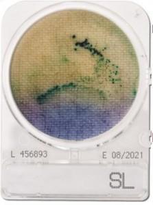 Đĩa Compact Dry Salmonella | Compact Dry SL Salmonella | Nissui
