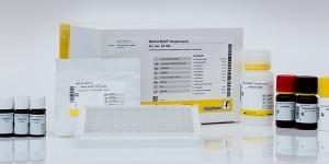 RIDASCREEN® Streptomycin Elisa test kit
